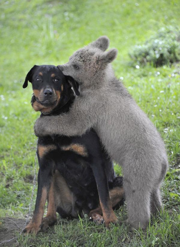 """Animais amorosos - """"dentadinhas de amor"""""""