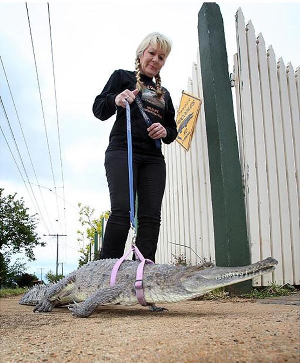 Animais domésticos absolutamente improváveis - crocodilo