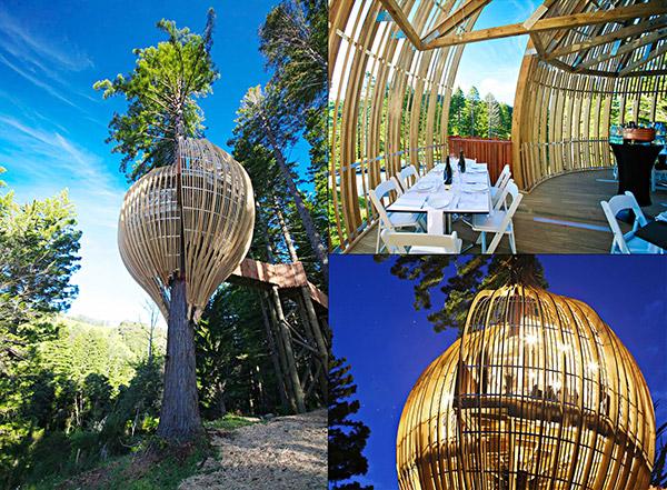 Restaurantes mais surpreendentes do mundo - restaurante na árvore, Nova Zelândia