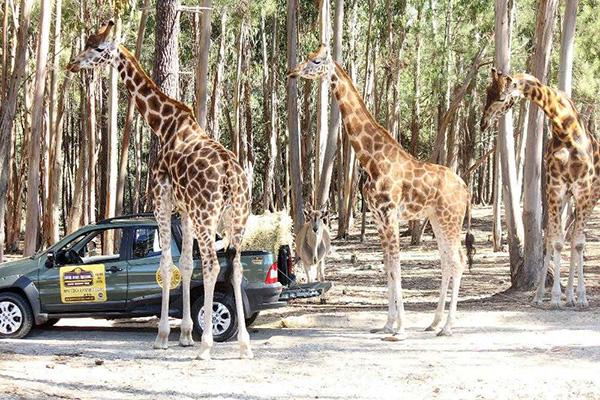 Parques temáticos espectaculares - Badoca Safari Park, Portugal