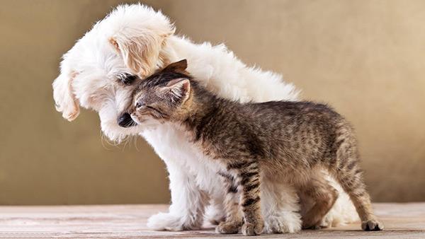 Animais amorosos - como cão e gato... será?