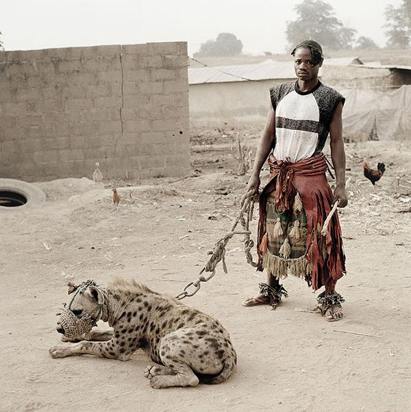 Animais domésticos absolutamente improváveis - hiena