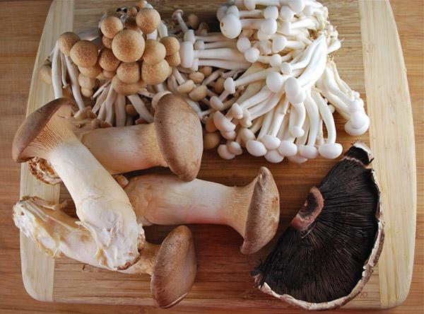 Dicas saudáveis, os benefícios dos cogumelos