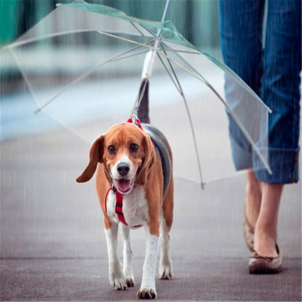 Capas para a chuva para o seu cão – chapéu de chuva