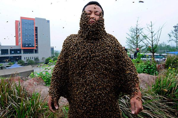 recordes do guinness impressionantes – abelhas