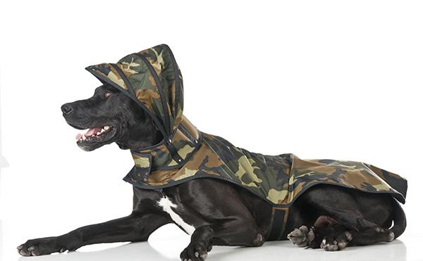 Capas para a chuva para o seu cão – militar