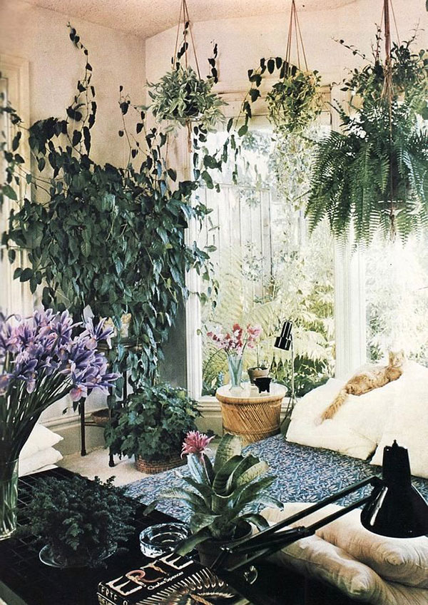 Jardins interiores - plantas penduradas