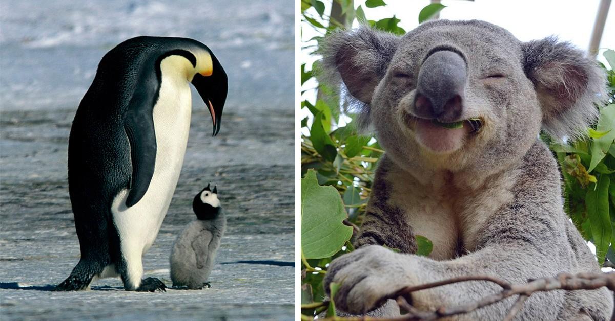 8 animais fofos em vias de extinção