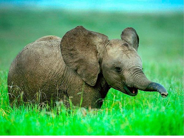 Curiosidades surpreendentes com números- elefante