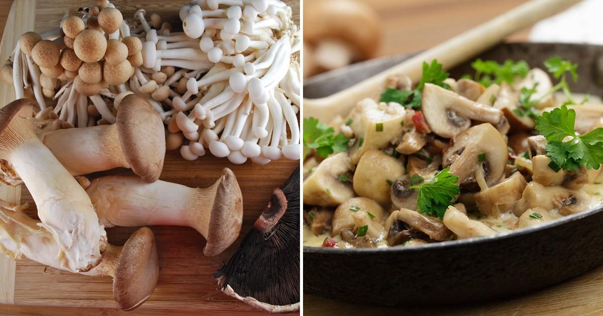 Dicas saudáveis: descubra os benefícios dos cogumelos