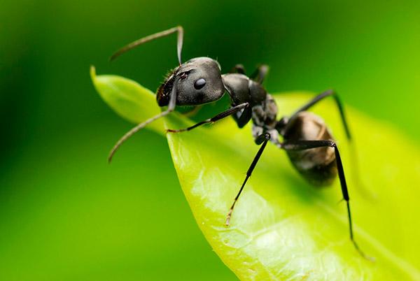 verdades tão loucas que parecem mentira – formigas