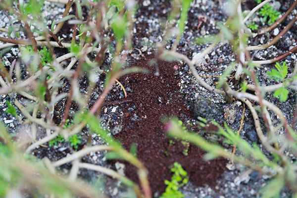 Usos surpreendentes das borras de café - Afastam os animais das plantas