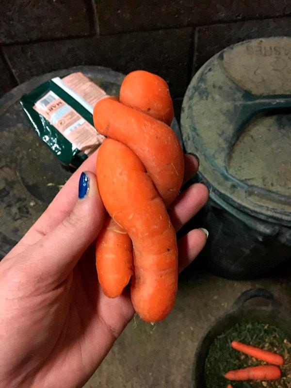Alimentos que nasceram com formas surpreendentes - cenouras