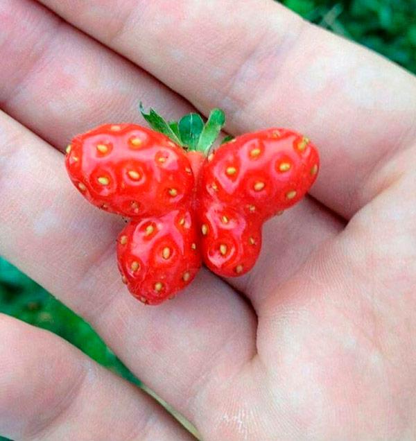 Alimentos que nasceram com formas surpreendentes - morango