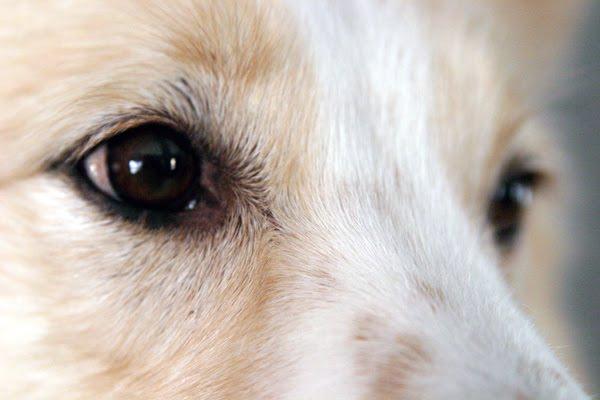10 factos sobre cães