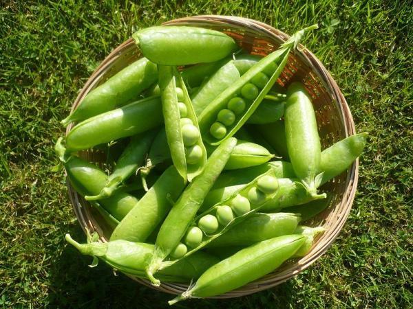 5 benefícios das ervilhas que são ideais para emagrecer - ervilhas na vagem
