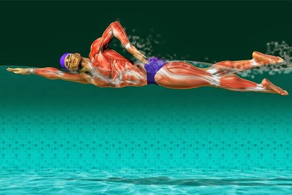 Os 10 benefícios da natação para a sua saúde - Fortalece o tónus muscular