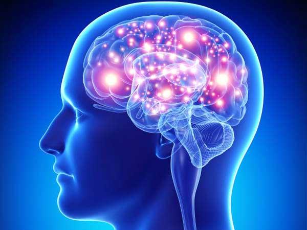 Cacau, o rei dos antioxidantes e os seus benefícios- Cérebro
