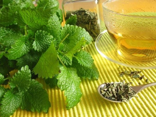 7 Grandes dicas para evitar a caspa -Chá de carqueja