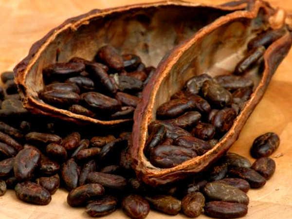 Cacau, o rei dos antioxidantes e os seus benefícios -Grãos de cacau