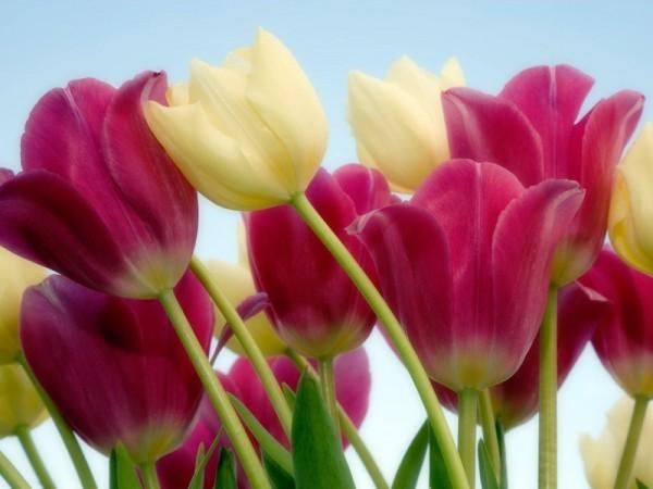 7 centros de mesa baratos e criativos - Use flores