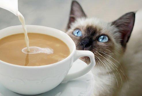 Resultado de imagem para cafe gato