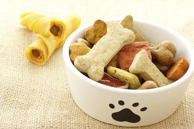 10 alimentos que não deve dar ao seu gato