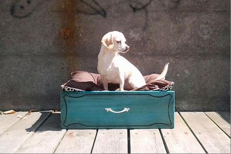 Gavetas antigas - 10 ideias de decoração - Nova cama para o cão