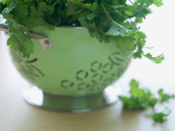 Sopa de coentros saudável para a primavera- Coentros
