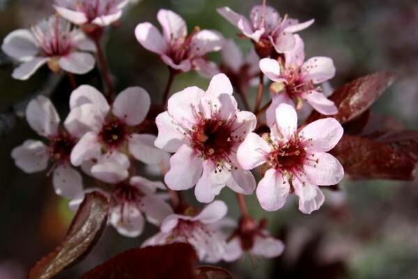 Semana Santa - 5 locais para visitar esta Páscoa - Festas da amendoeira em flor