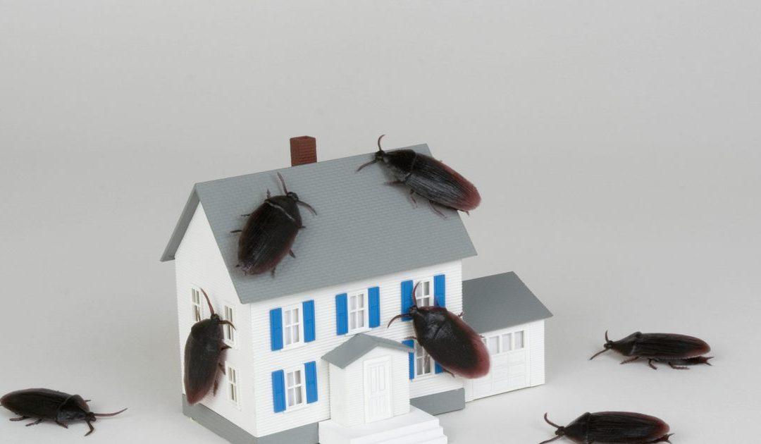 7 soluções para prevenir e eliminar baratas de sua casa