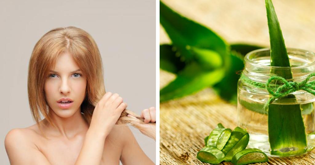Dicas saudáveis – 10 Benefícios da Aloe Vera