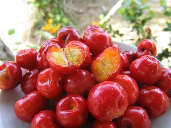 10 Benefícios da acerola para a nossa saúde- Fonte de vitamina C