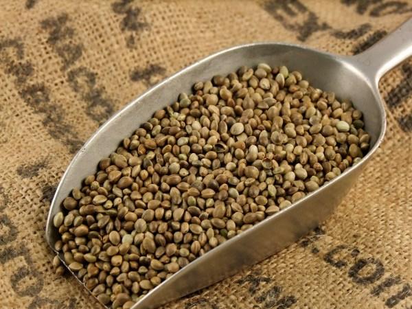 Benefícios das sementes de Cânhamo para o nosso organismo- Protegem o nosso coração
