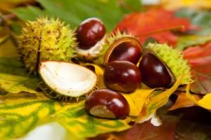 Dicas saudáveis – benefícios da castanha da Índia