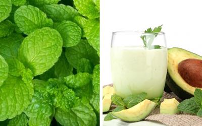 Shake de abacate e hortelã – uma bebida refrescante