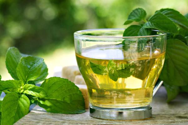 7 Benefícios das folhas de chá de boldo para a sua saúde- Fortalece o sistema imunitário