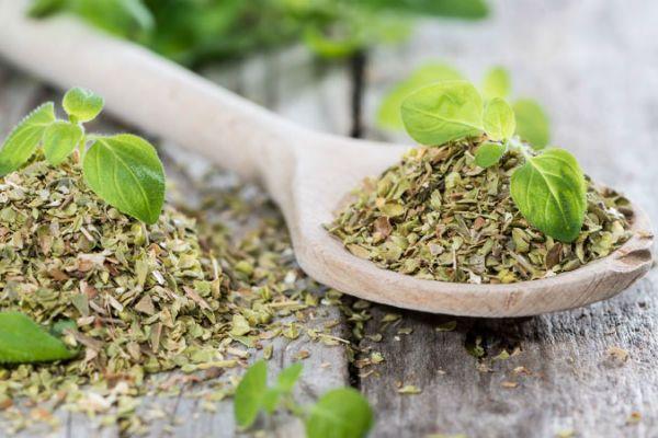 7 Benefícios das folhas de chá de boldo para a sua saúde- Efeito calmante
