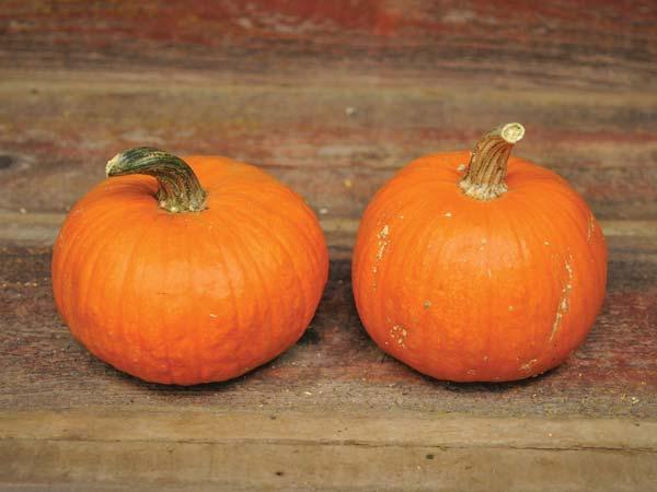 Receita de bolo de abóbora e laranja com chocolate- Bolo de abóbora e laranja com chocolate