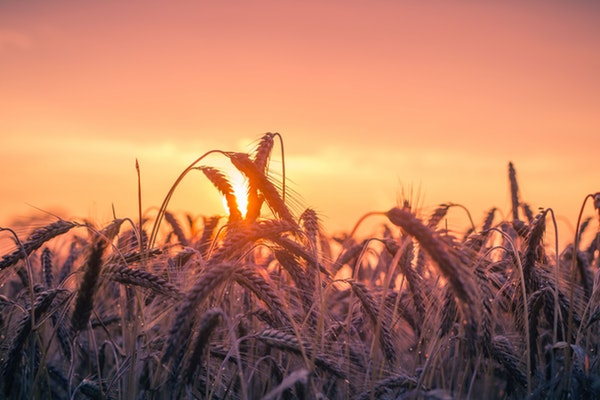 Alimentos que devemos consumir todos os dias- Cereais integrais