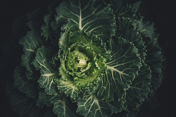 10 alimentos anti-cancro que deve ter em casa- Couve