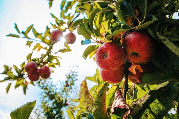 10 alimentos que fazem bem à saúde- Maçã