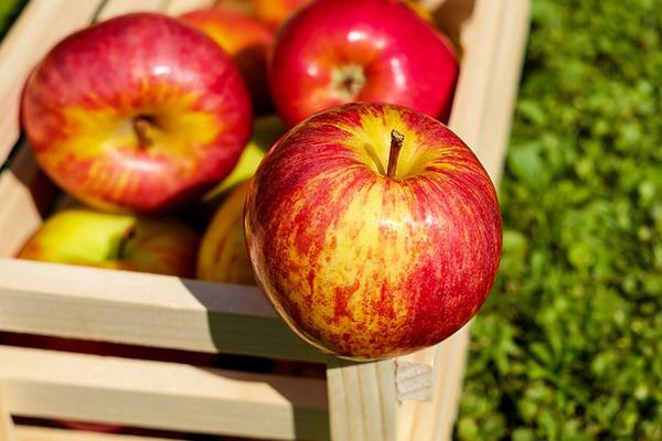 Alimentos que devemos consumir todos os dias- Maçã