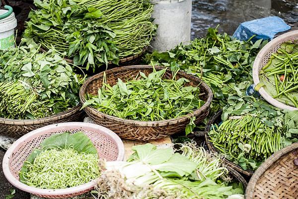 Alimentos que devemos consumir todos os dias- Vegetais verde escuros