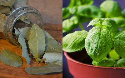 Ervas aromáticas que pode cultivar em casa