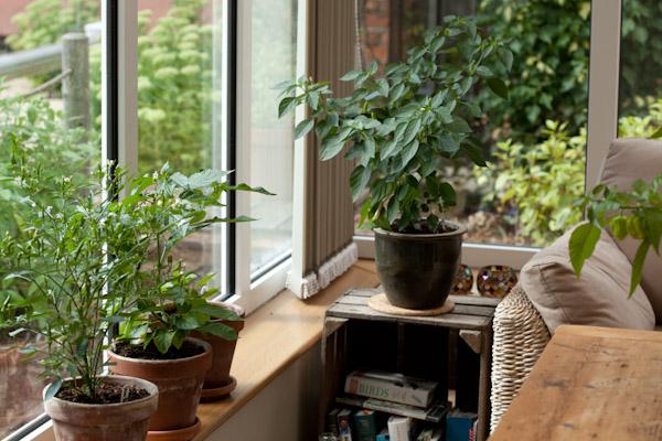 Como manter a sua casa frescanos dias de maior calor- Tenha muitas plantas em casa