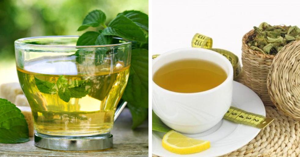 7 Benefícios das folhas de chá de boldo para a sua saúde