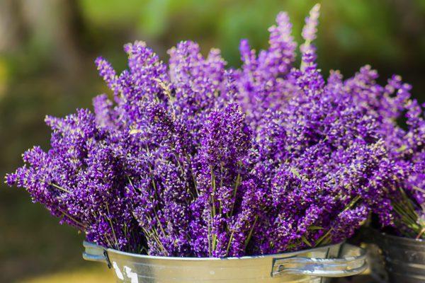 As flores ideais para cada divisão da sua casa - lavanda