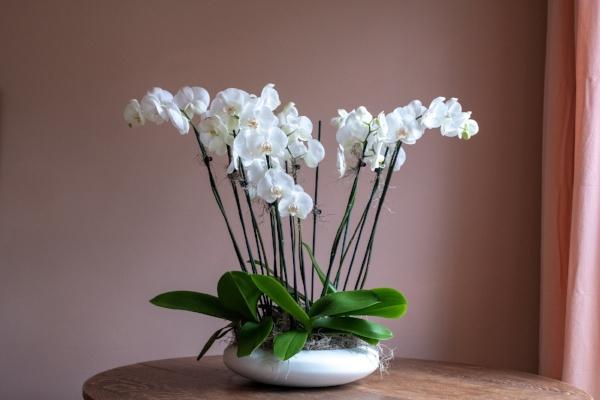 As flores ideais para cada divisão da sua casa - orquídeas